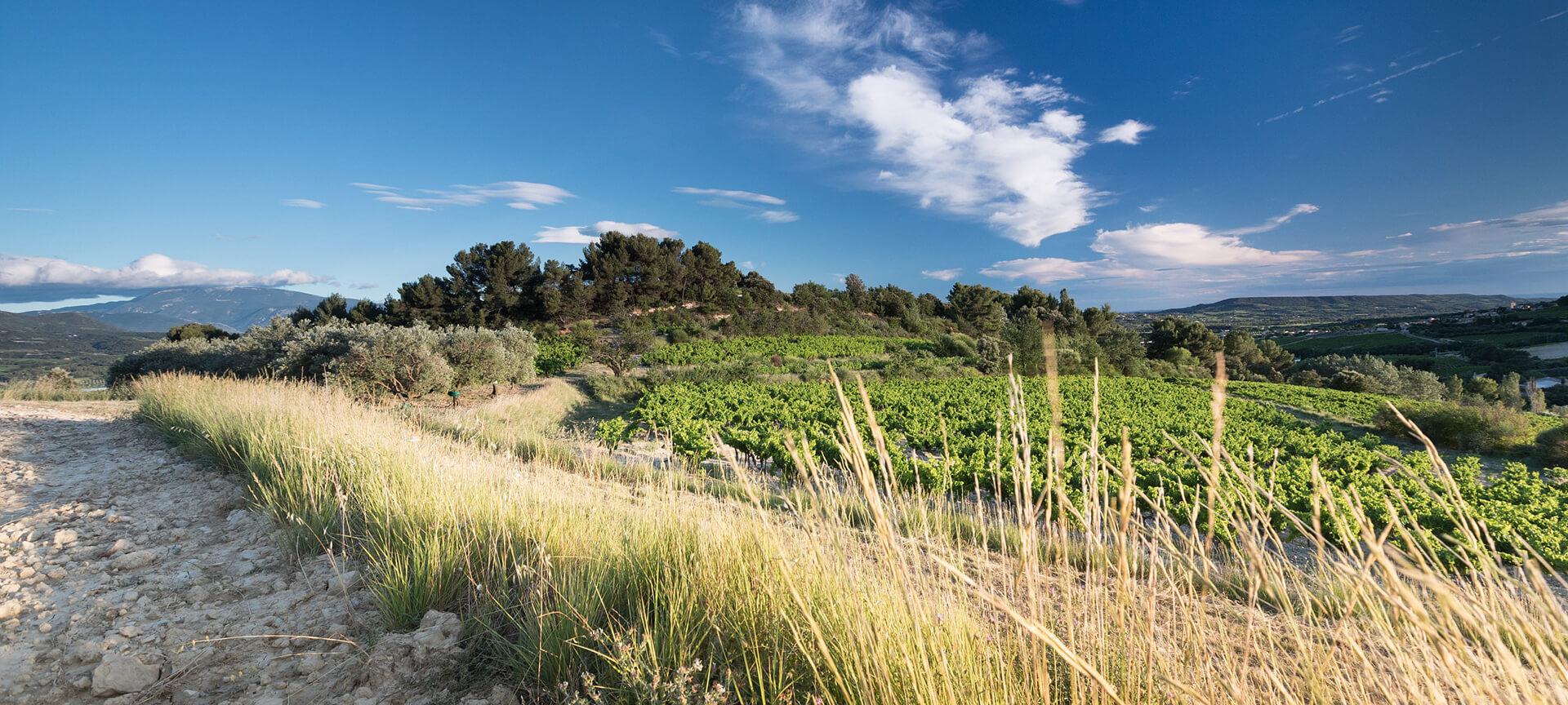 Vignobles en Ardèche