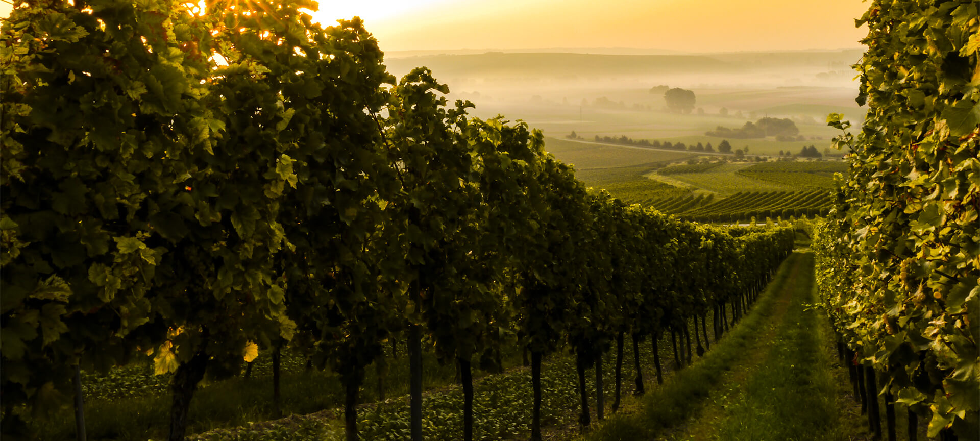 The Rhone Valley :  The 2nd largest French AOC wine area