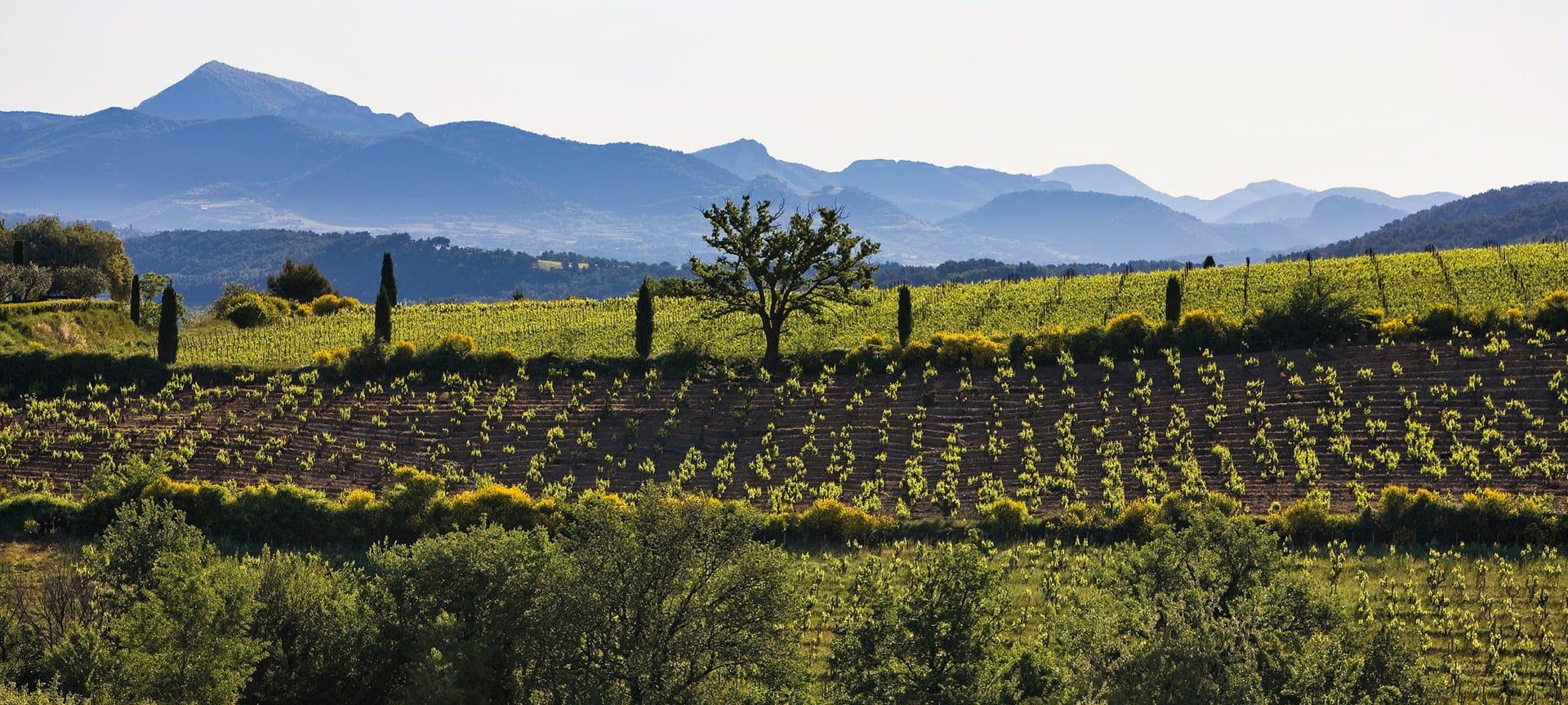 Natural sweet wine Rasteau