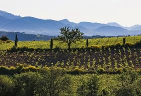 Vins Doux Naturel Rasteau